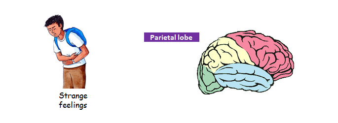 Parietal lobe epilepsy | Focal (partial) seizures | Epilepsy ...